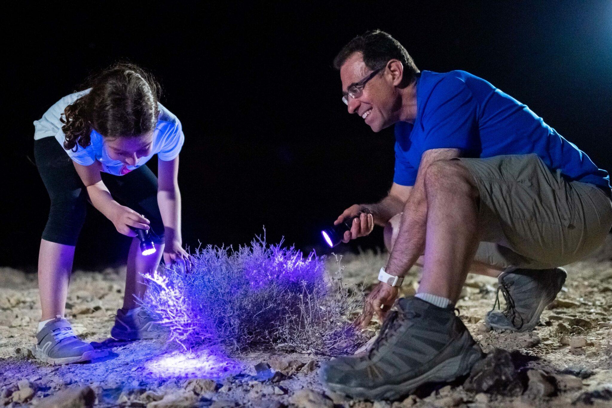 אב וילדה מחפשים עקרבים עם פנסים מיוחדים בנחל חווארים לילה