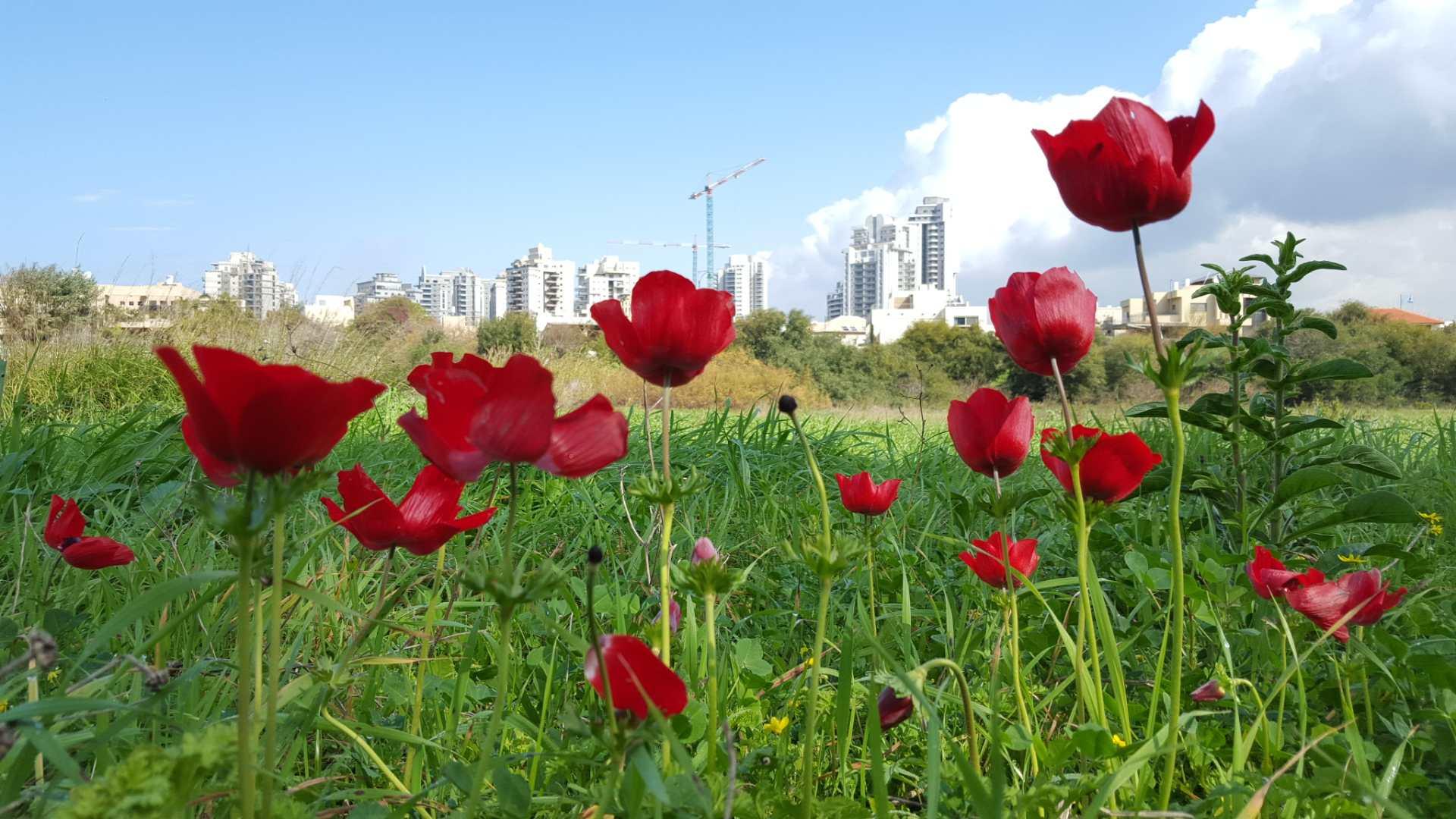 פריחה בטבע עירוני