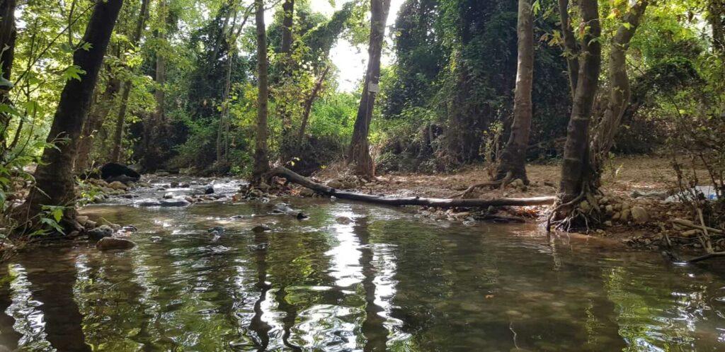מים זורמים וצמחיה בנחל כזיב