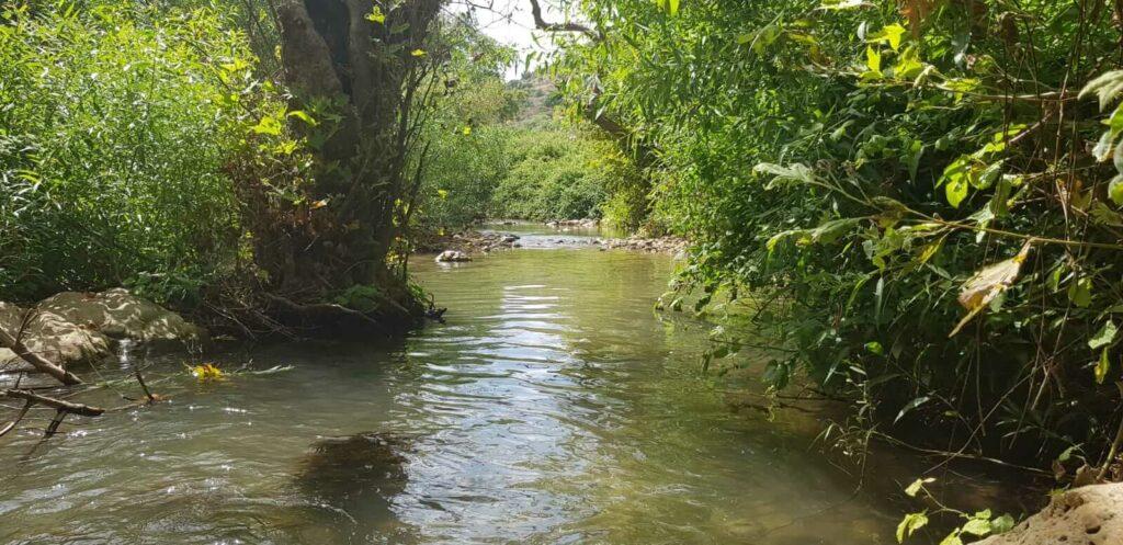 עצים מעל המים בנחל כזיב