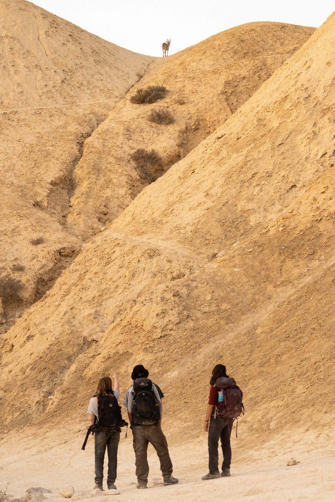 מטיילים רואים יעל על הגבעה